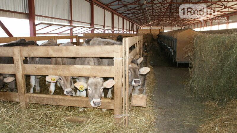 От коровы до прилавка: как в Ростовской области производят молоко, фото-9