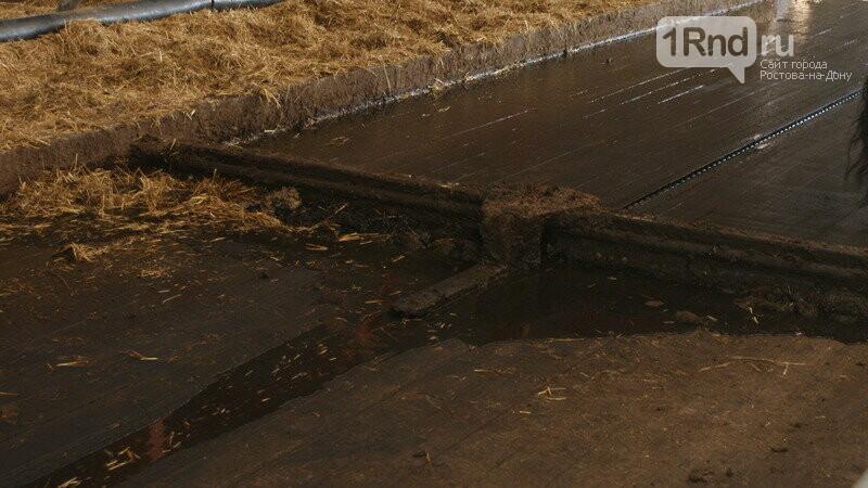 От коровы до прилавка: как в Ростовской области производят молоко, фото-13