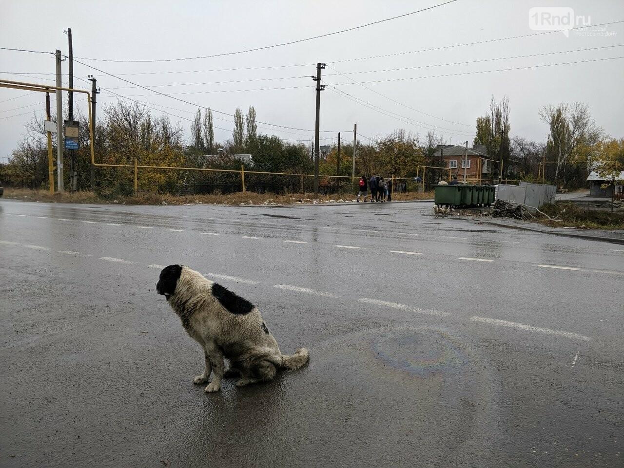 Путь к знаниям: как ростовские школьники добираются до своих школ, фото-18