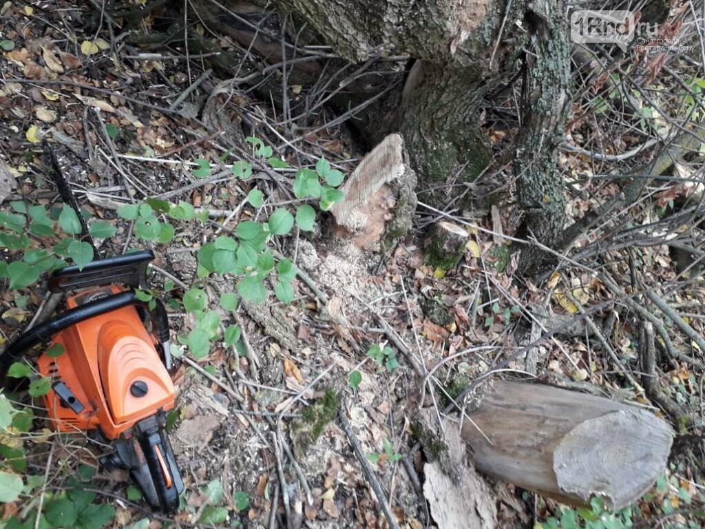 В Ростовской области пресекли незаконную вырубку ясеней, фото-1