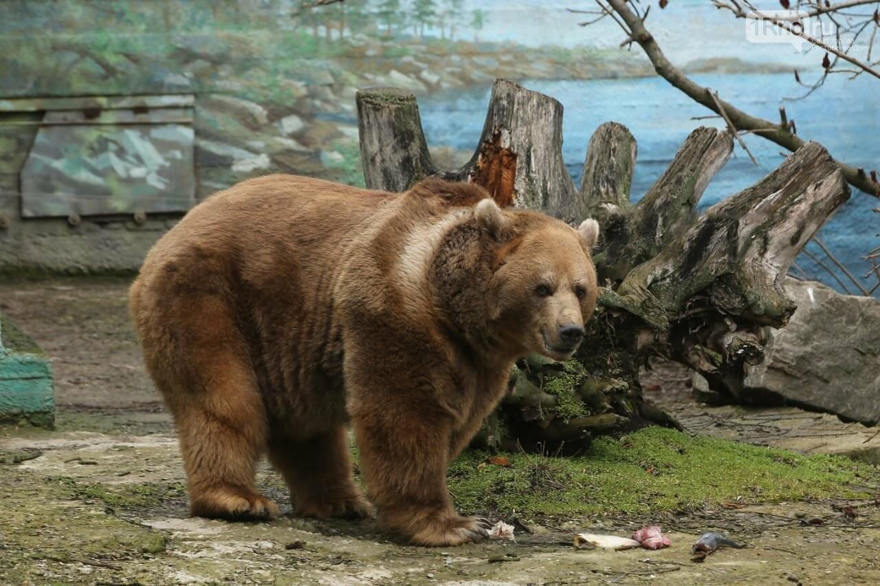Бурый медведь Андрюша проснулся от спячки в зоопарке Ростова, фото-1