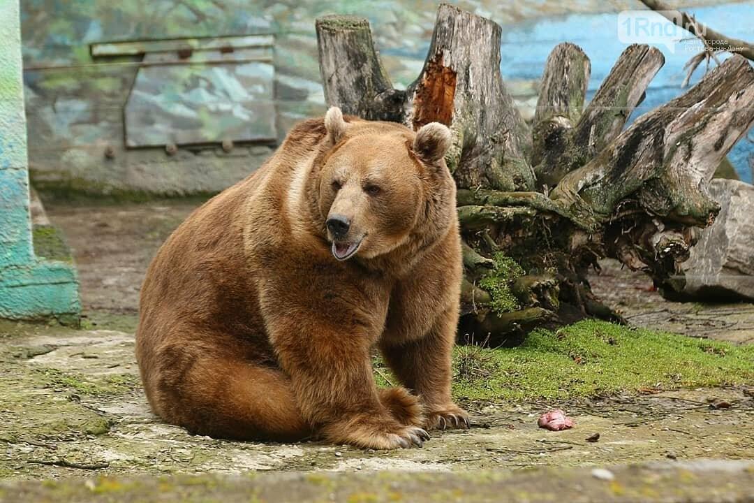 Бурый медведь Андрюша проснулся от спячки в зоопарке Ростова, фото-2