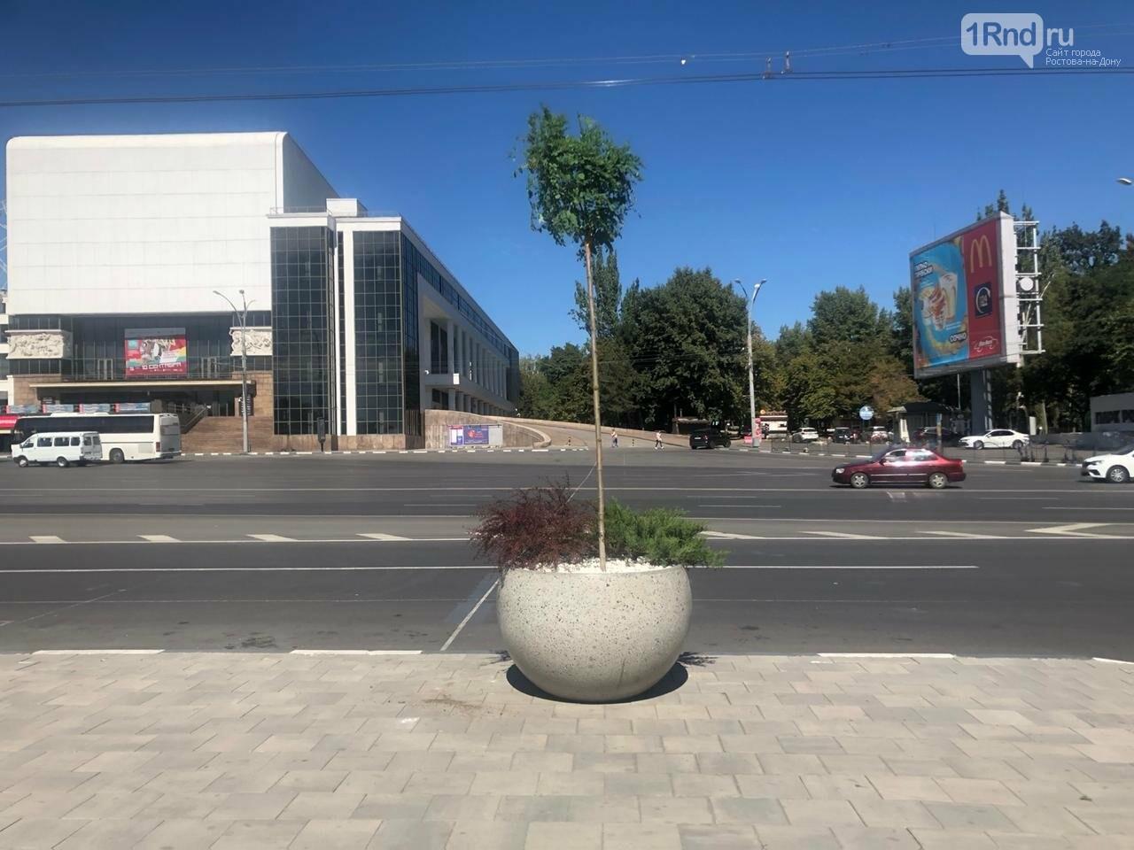 Кадки с деревьями появились на Театральной площади Ростова