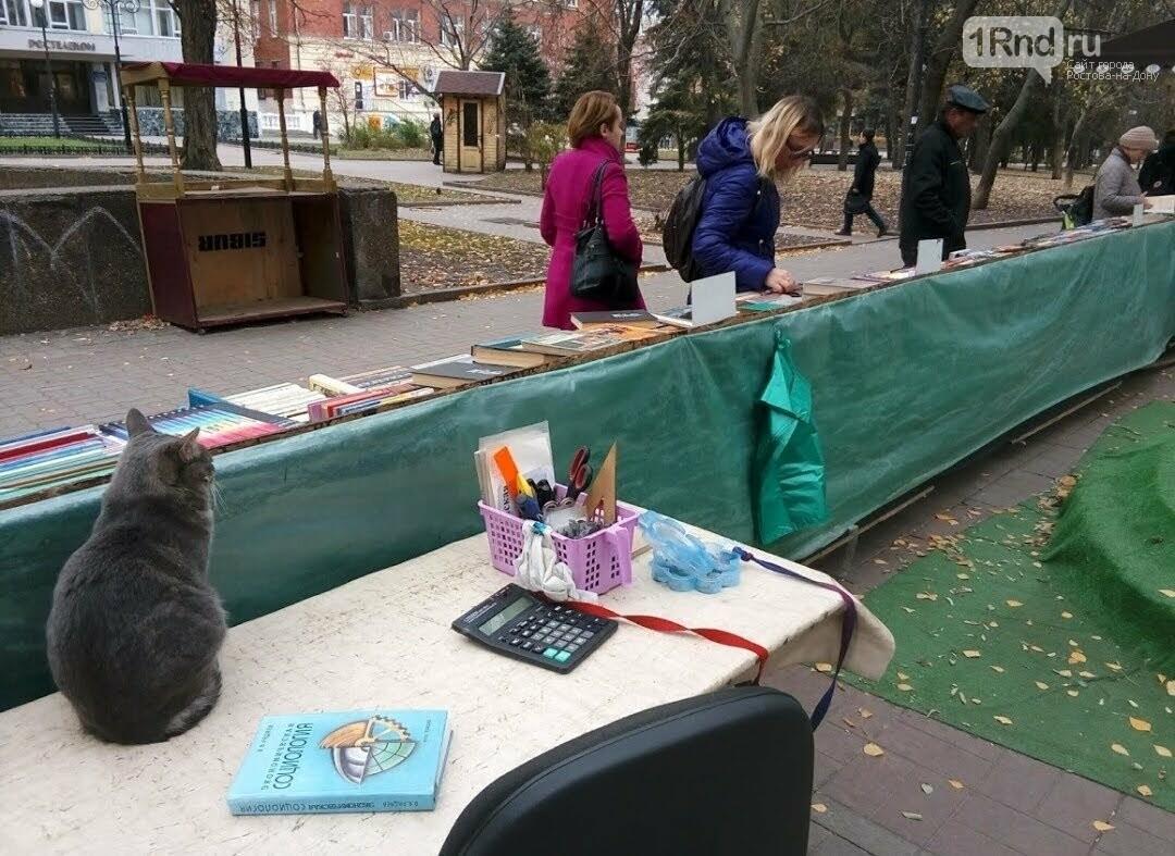 Котик на книжном развале ДГПБ, Фото Анны Дунаевой