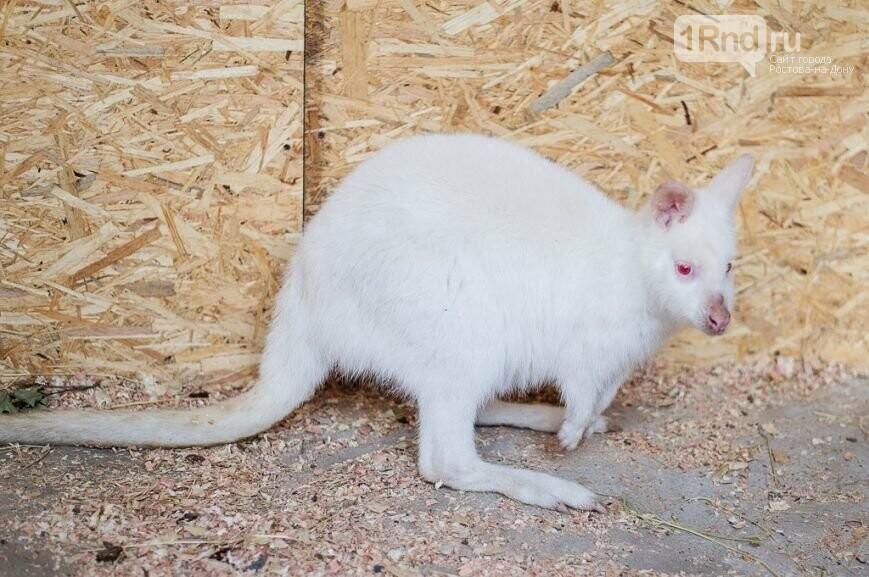 Экзотических животных, задержанных награнице вРостовской области, расположили вростовский зоопарк