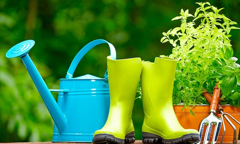 Дачный сезон в разгаре: лунный посевной календарь на май 2021 года для садовода и огородника