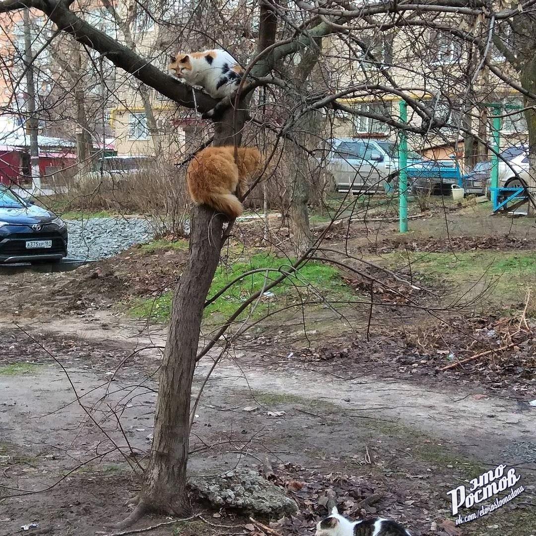 """Ростовчане делятся в Сети """"весенними"""" фотографиями в январе, фото-4"""