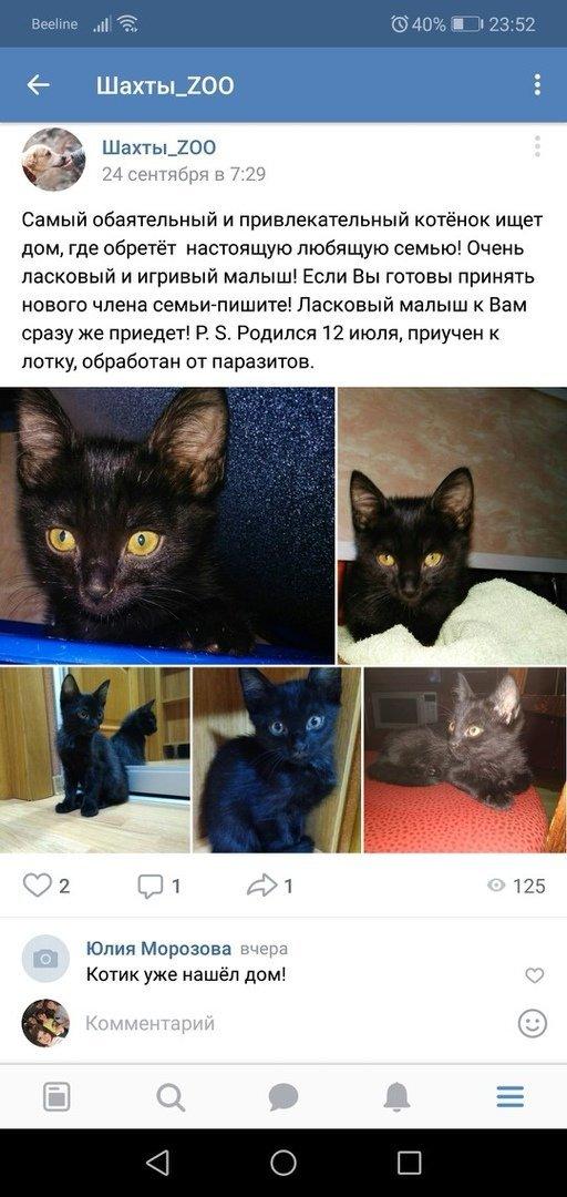 В Шахтах живодеры отрезали лапки котенку и выбросили его на дорогу, фото-2