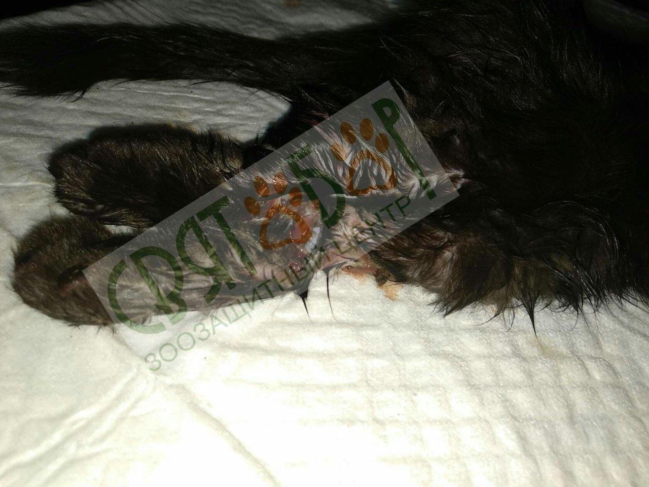 В Шахтах живодеры отрезали лапки котенку и выбросили его на дорогу, фото-1