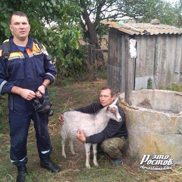 В Ростовской области из 20-метрового колодца спасатели вызволили козла, фото-1