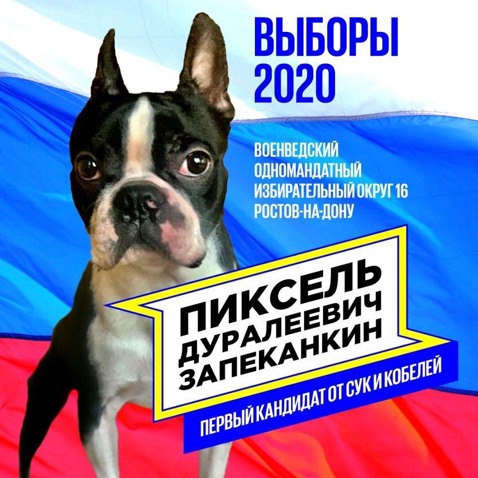 Пиксель - кандидат в депутаты думы Ростова от Партии Сук и Кобелей)