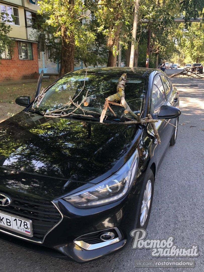 Сухое дерево упало на машину с детьми в Ростове