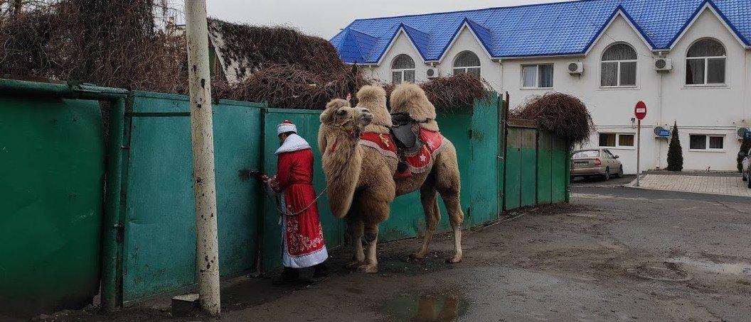 В Анапе верблюд удивил отдыхающих на пляже | 454x1056